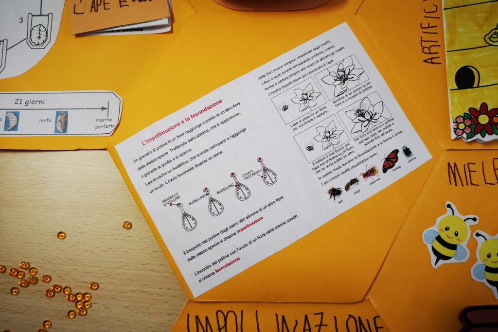 Schede didattiche sulle api scuola infanzia e scuola primaria