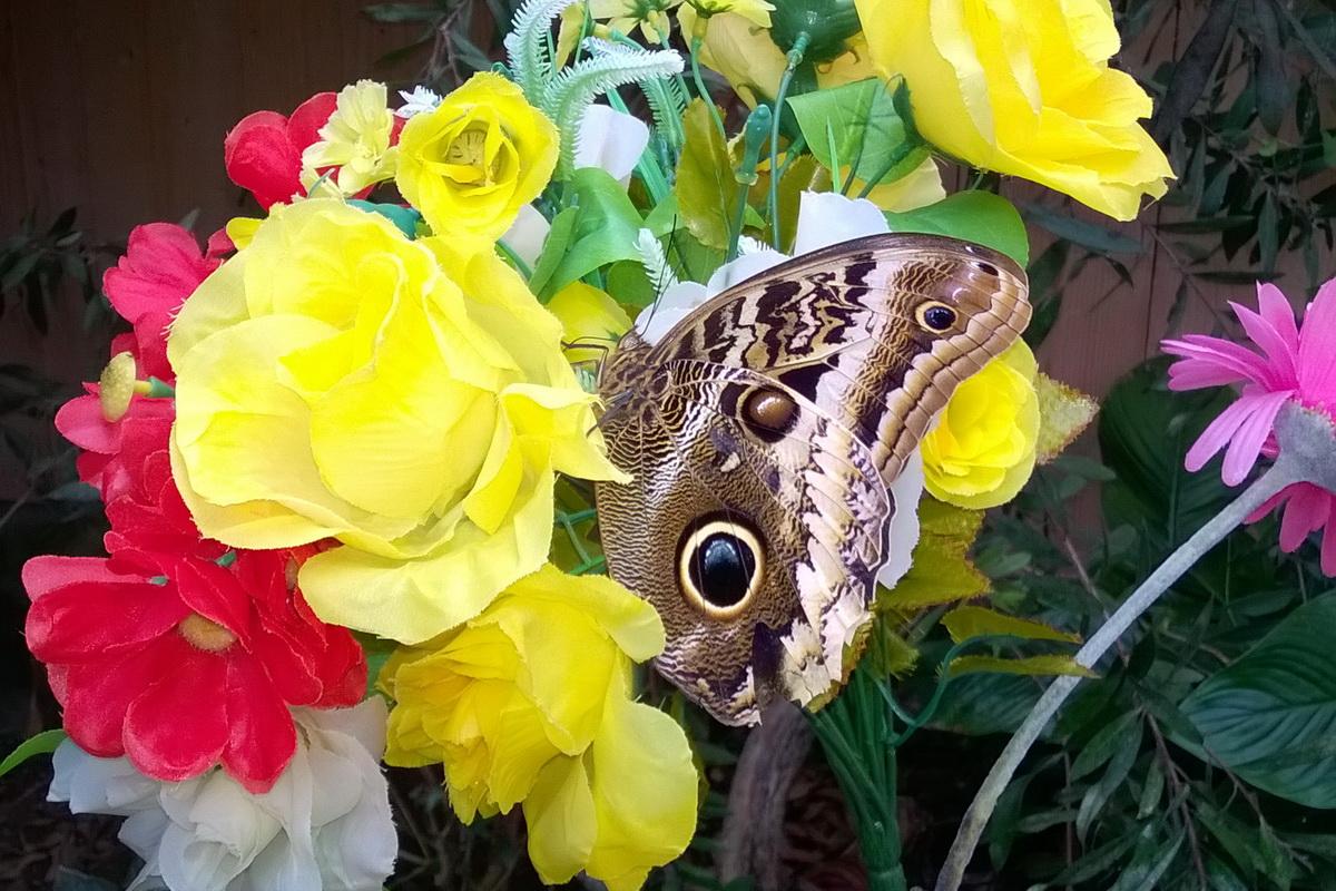Casa Della Carta Padova butterfly arc, la casa delle farfalle a padova - la luna di
