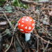 coltivare funghi in casa con i bambini