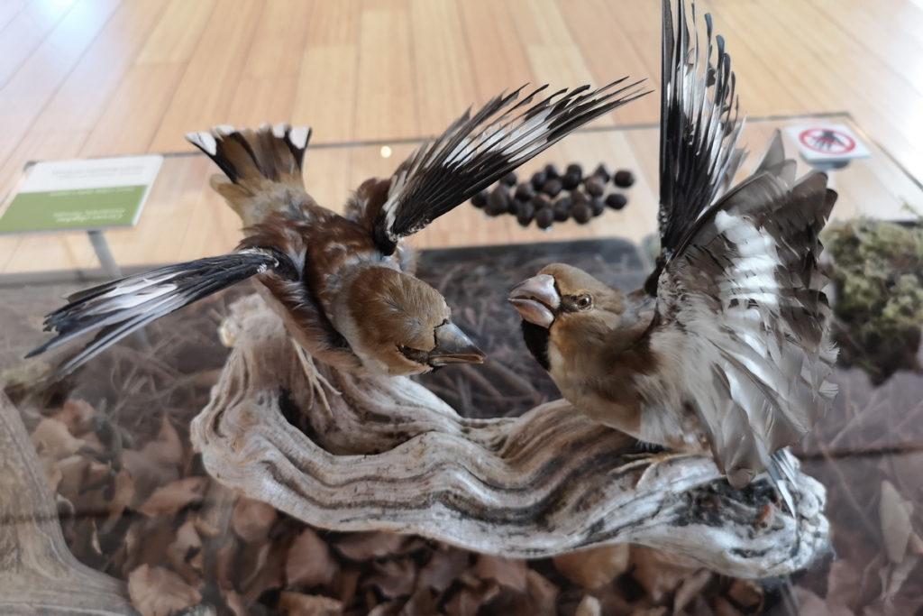 Uccellini come affrontano l'inverno