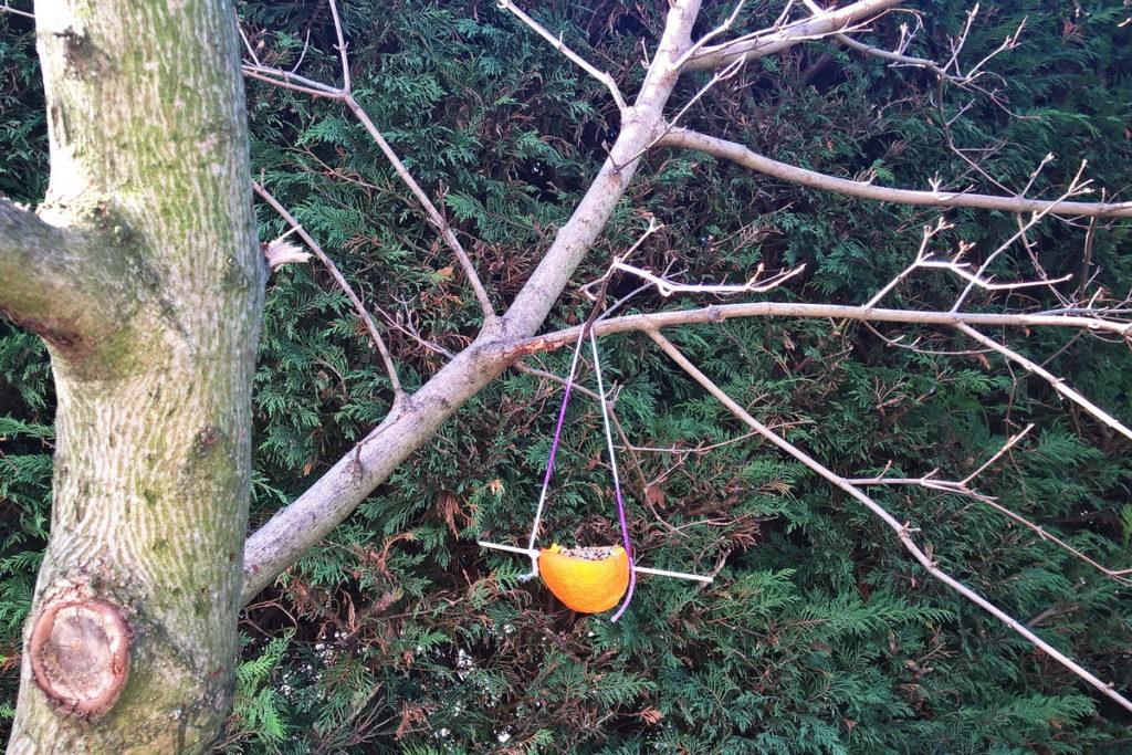 Mangiatoie ecologiche per uccellini con le bucce di arancia