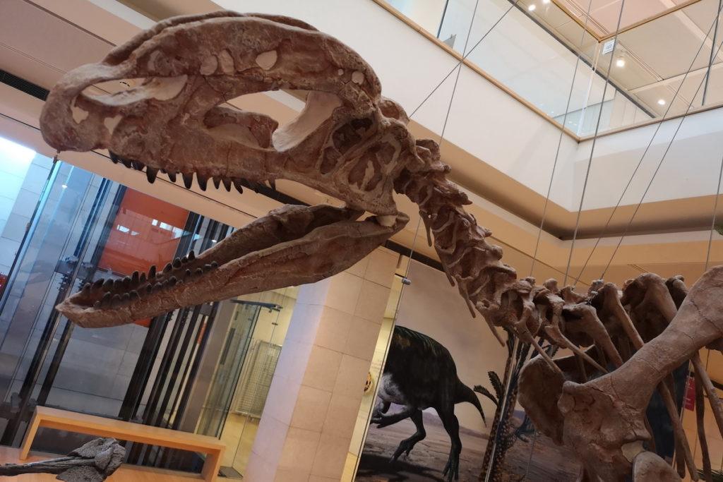muse per vedere fossili di dinosauri
