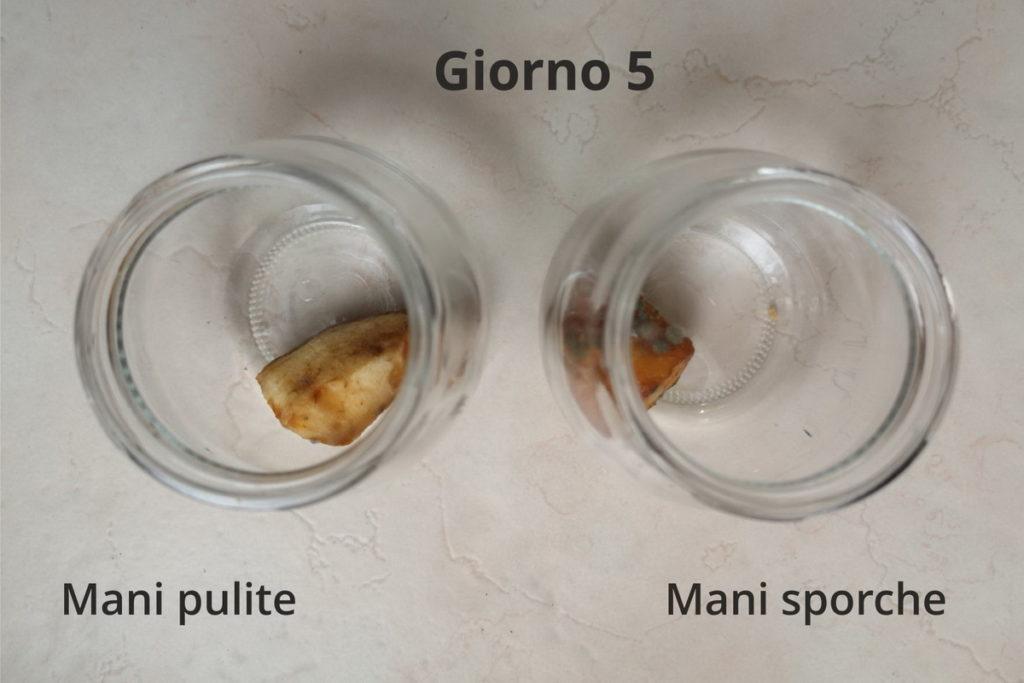 esperimenti per creare colonie di microrganismi