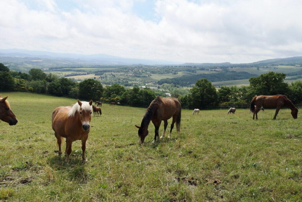 cos'è l'equitazione naturale?