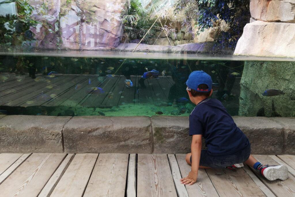 Bambini al parco zoo di verona