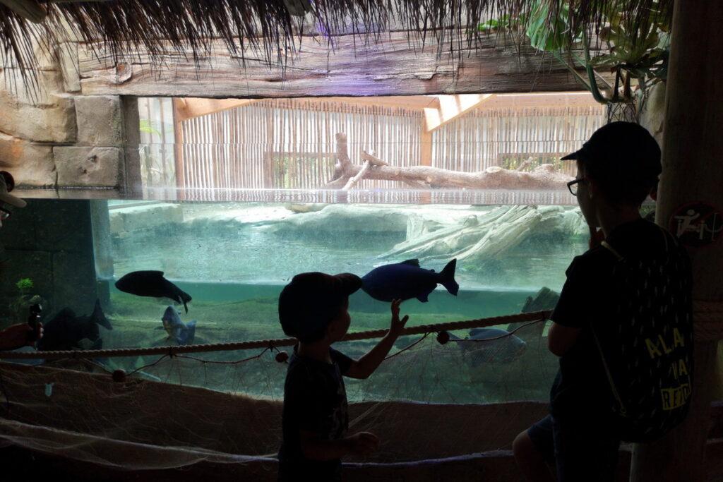 E' importante andare negli zoo con i bambini