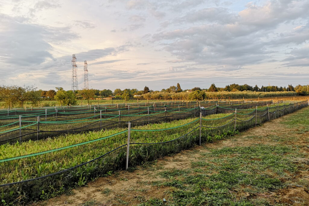 Visitare un allevamento di lumache