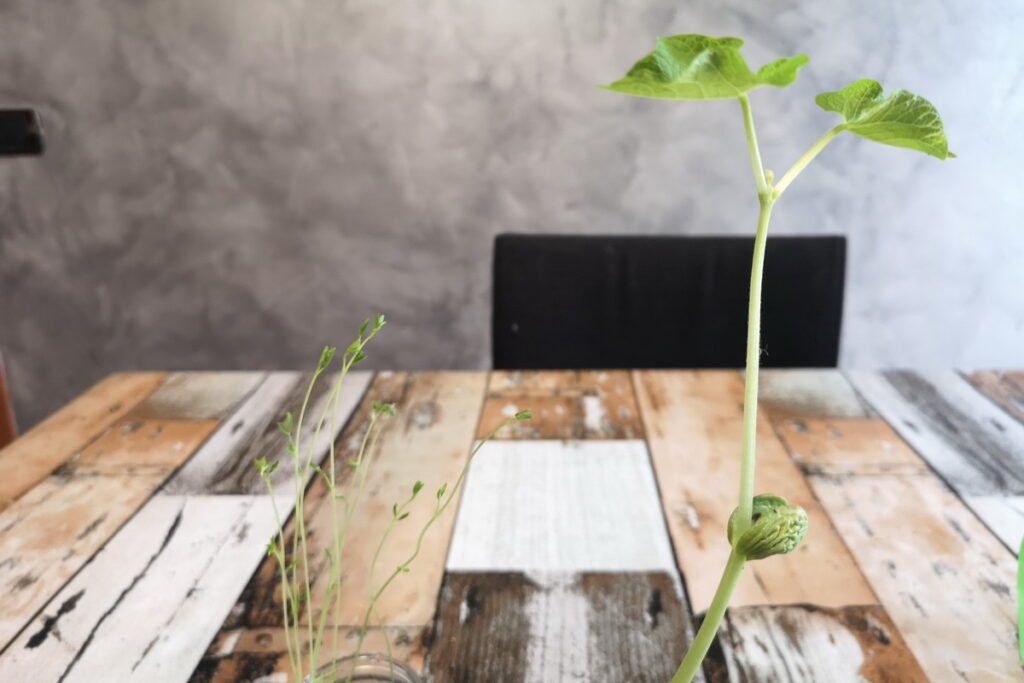 Idee creative per bambini con i semi