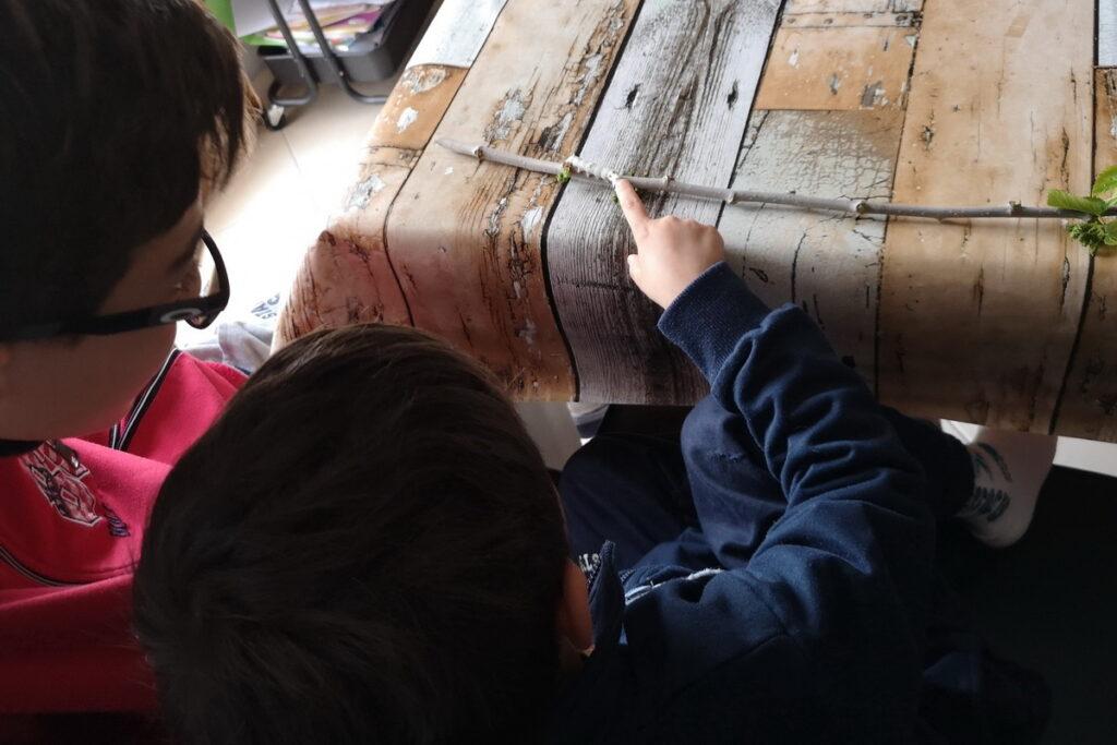 come allevare bachi da seta con i bambini