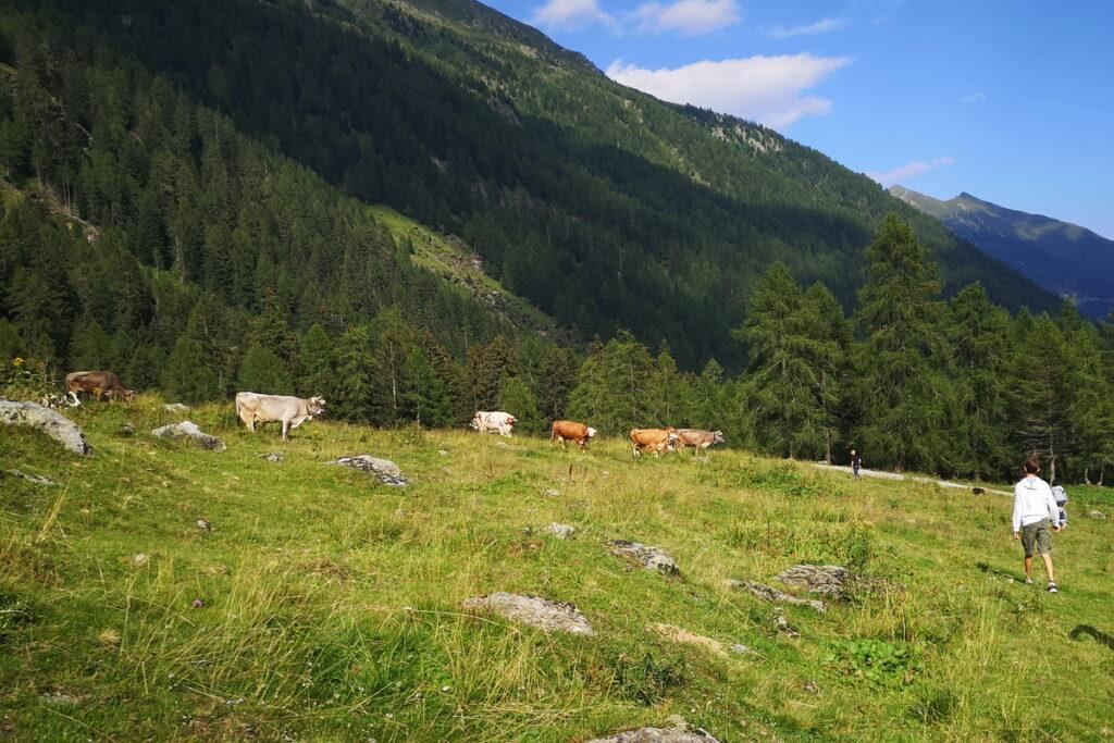 malga Bordolona in Val di Non