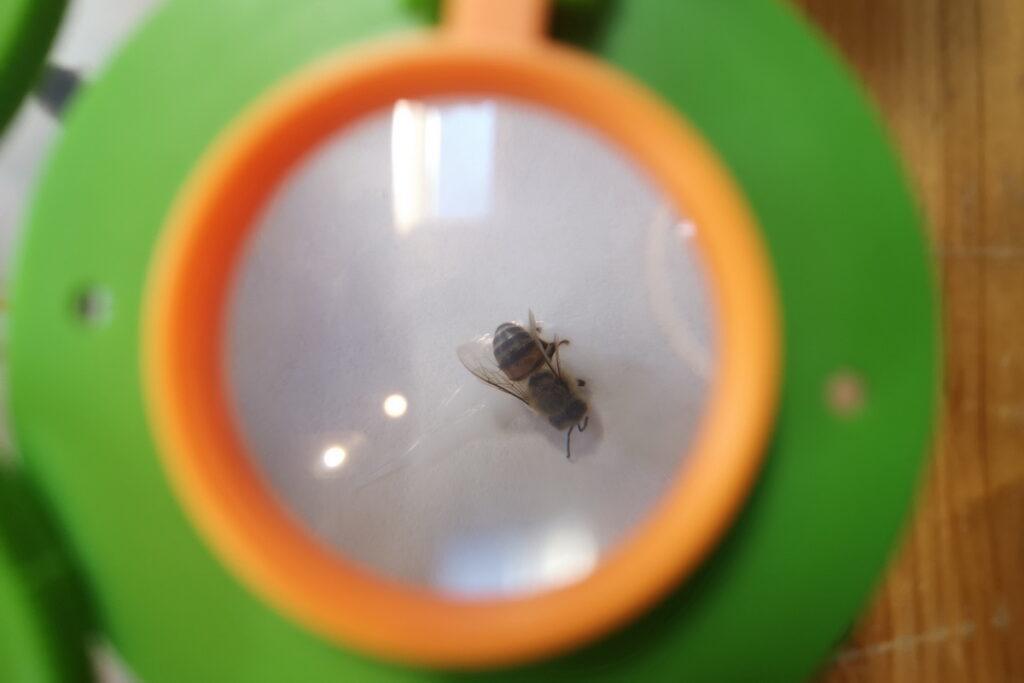 Musei dedicati alle api in Italia